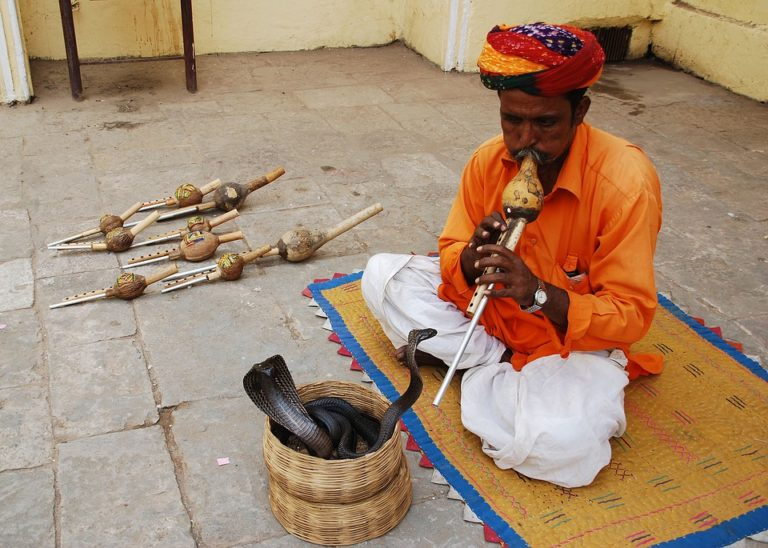 snake charmer knowledgeride